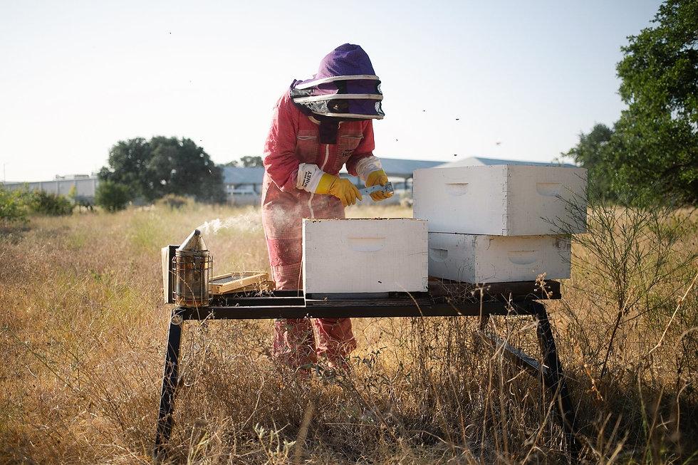 Round-Rock-Honey-Beekeeper.jpg