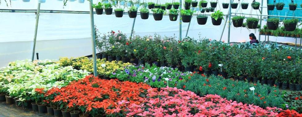 Swac nursery and garden