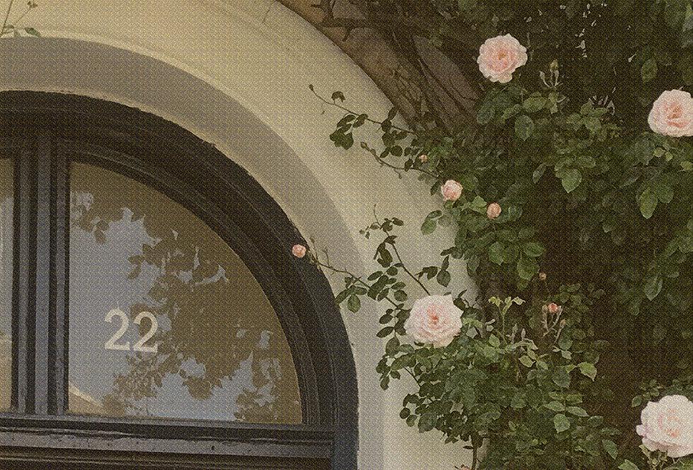 ROSE NO.2