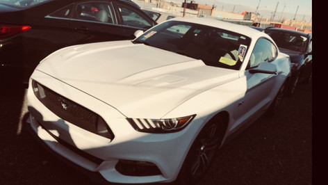 Mustang heading to its new home in Germany