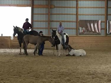 workshop with foal development