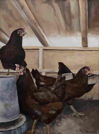 Hens Inside the Coop