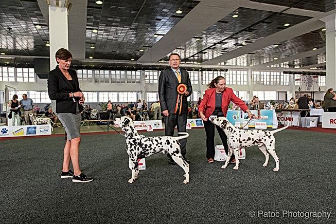 Dog Show Gégé-58.jpg