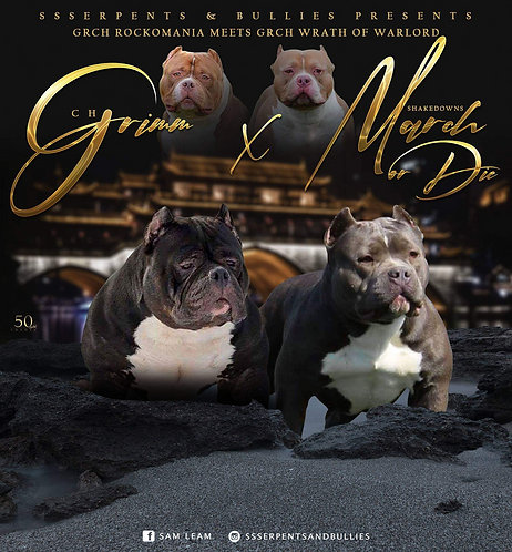 Litter SOLD Out - CH Grimm x March or Die - Female