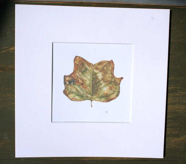 Stampa giclée, Foglia dell'Albero dei Tulipani
