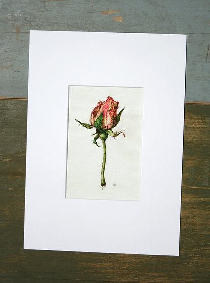 Stampa giclée, Bocciolo di rosa