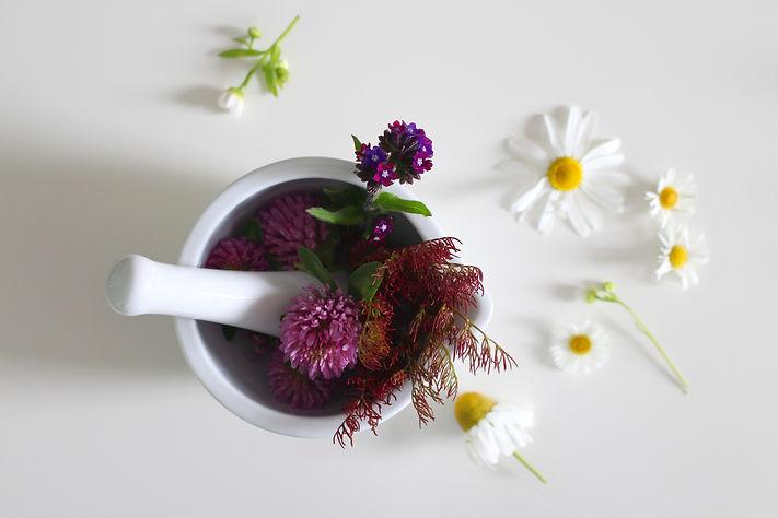 medicinal-flower-4246073.jpg