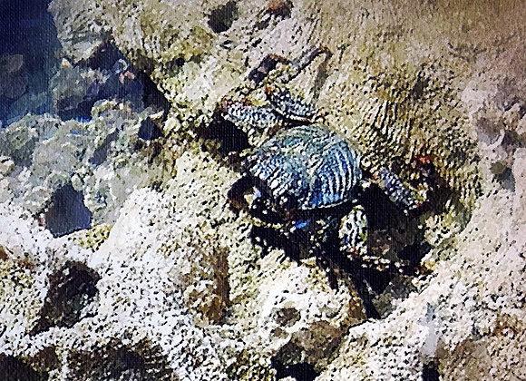 Blue Crab Hiding Poster