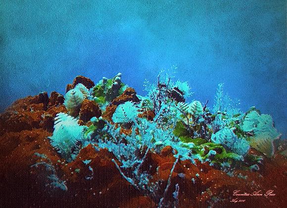 The Oceans Garden Canvas