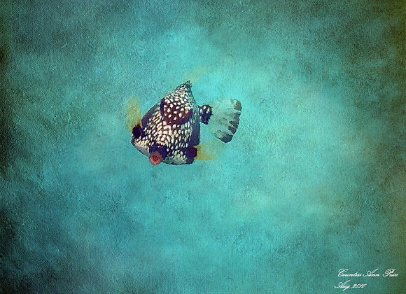 Blow Fish Heaven Canvas