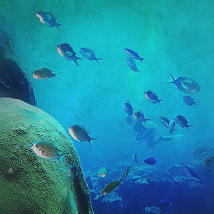 Swimming with The Fish Canvas