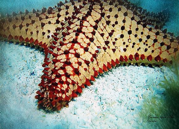 Star Fish Canvas