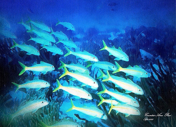 Glowing School of Fish Photo paper poster