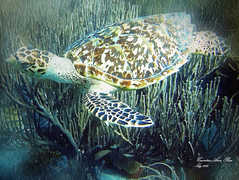 Sea Turtle Canvas Web Ready.jpg