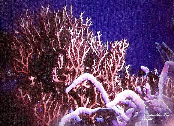 Coral Life Canvas