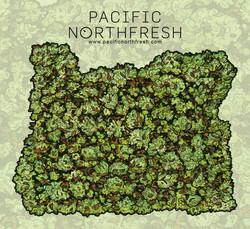 Oregon Buds Sticker