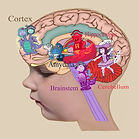 Therapy of the brain. Learning how the brain works.