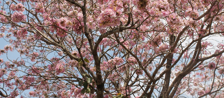 Primavera e alegria