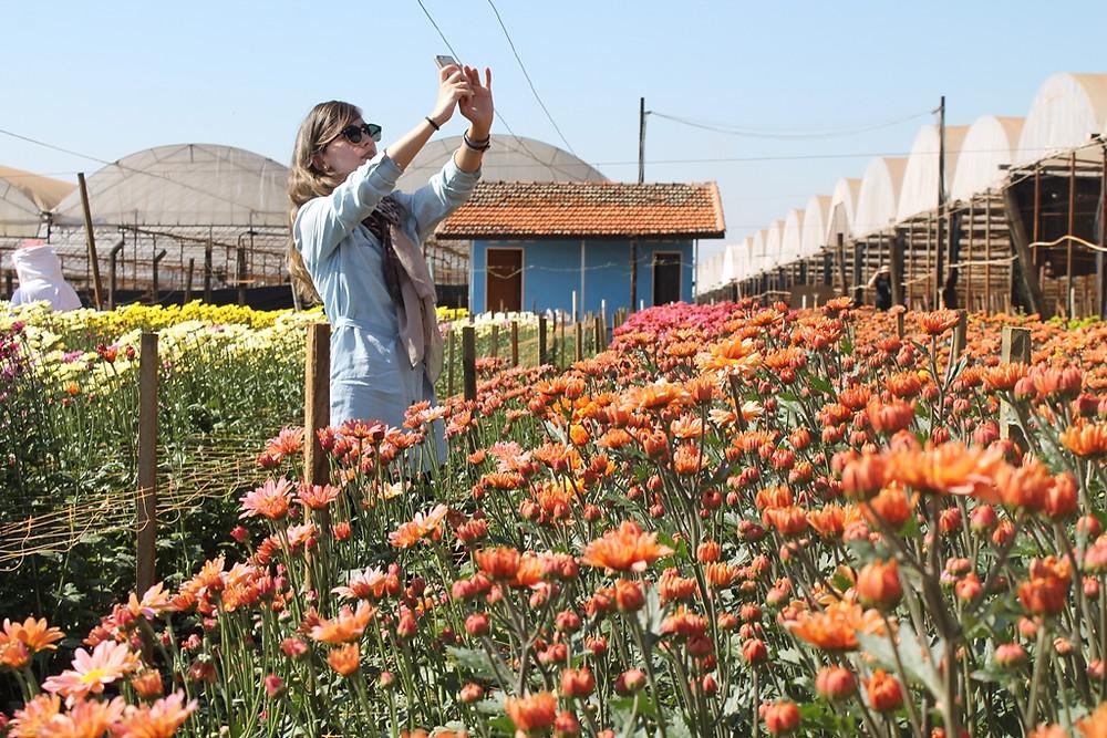 Crisântemos-Holambra-Passeio turístico-Fotografia-Cidade das Flores-Campo de flores
