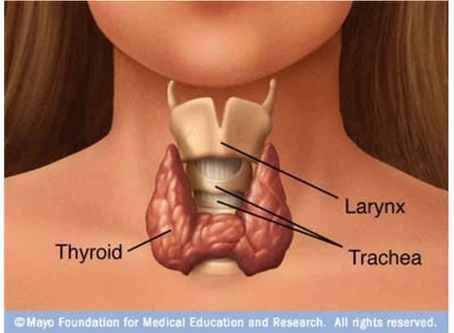 Want to Optimize Your Health?  Check Your Thyroid First!