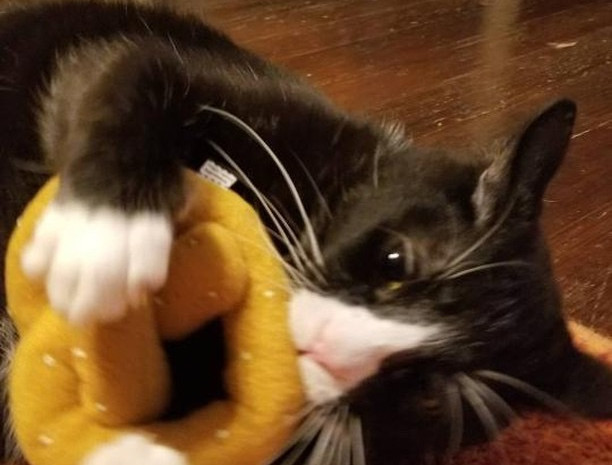 """Ace with Pretzel"" Photo by @zewcrewmeowz"