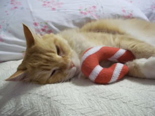 """""""Ginger with Candycane"""" Photo By: Susan Larkin"""