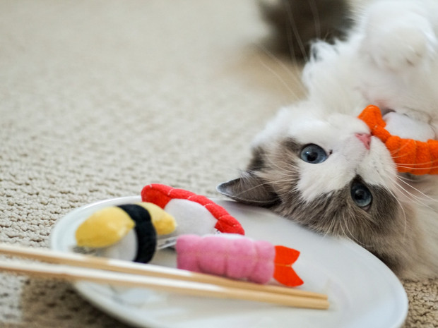 Cora with Sushi Photo By: Sean Lee
