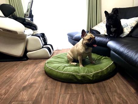ロボフロアー施工完了✨ポルコ&ミランダ邸|施工後動画|愛犬に優しい床リノベーション
