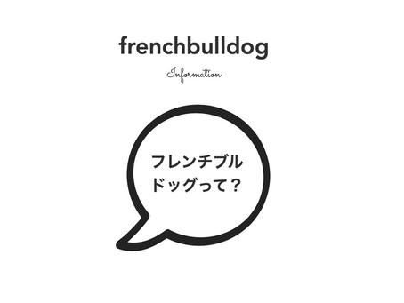 フレンチブルドッグ子犬の価格差って?|子犬選びのポイント!|1月〜2月も可愛い子犬達が沢山です〜💕