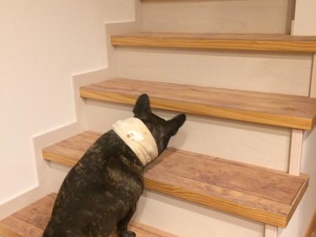 ペットと暮らす床のお悩み解消♫|ロボフロアー 階段 施工!|広島県 I 様邸|階段も安心の床材は