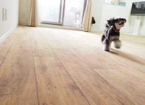 ツルツル床から愛犬を守る床リノベーション|B&BFLOR|広島市T様邸施工