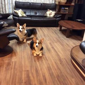 ペットと暮らす床のお悩み解消♫|ロボフロアー施工完了✨|広島市 K様邸