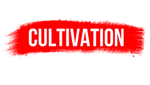 TEXT WEB PNG cultivation.png