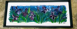 Extra Large Irises