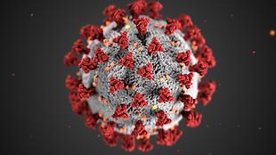 Coronavirus_3D_illustration_by_CDC_1600x