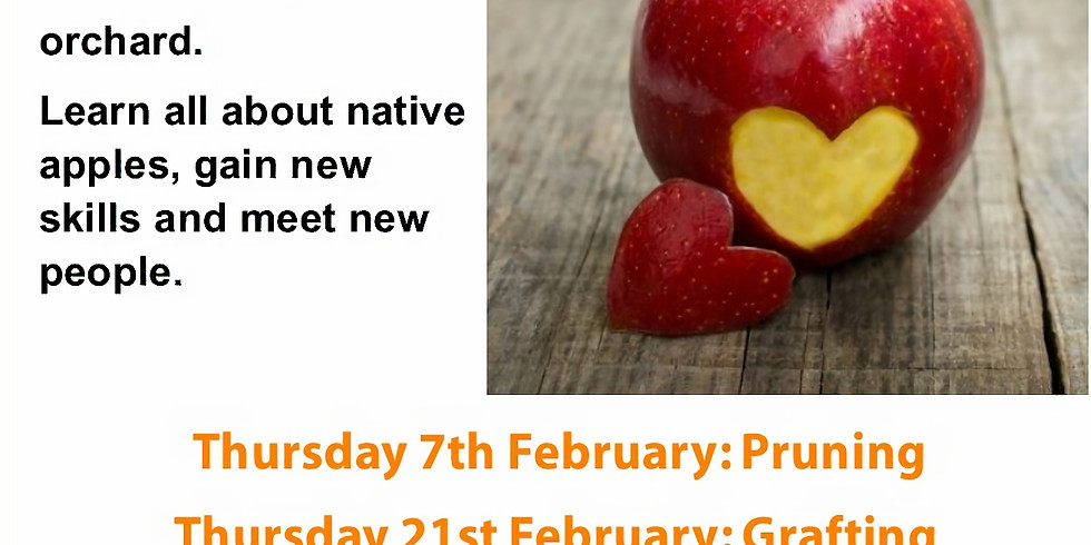 Love our Apples  (Grafting Day)