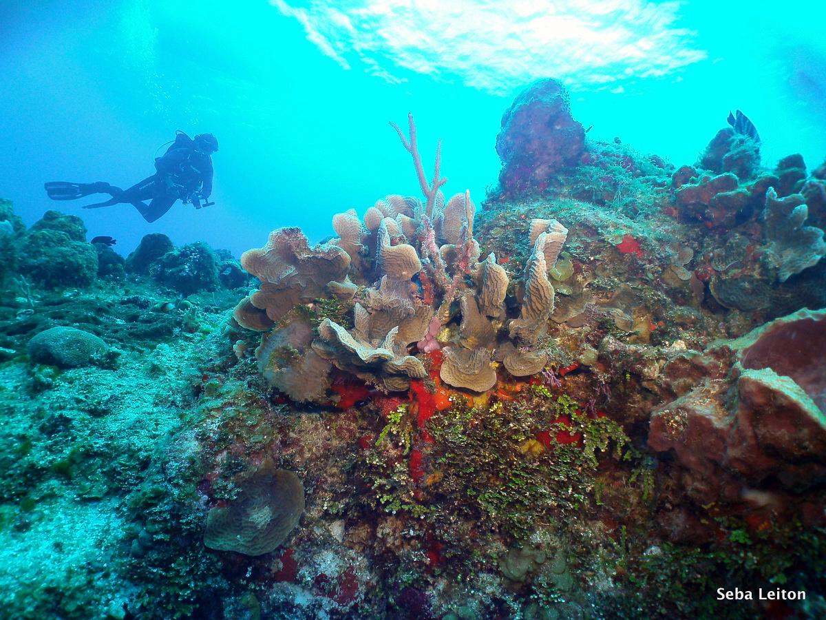 Arrecife de coral, Cozumel México