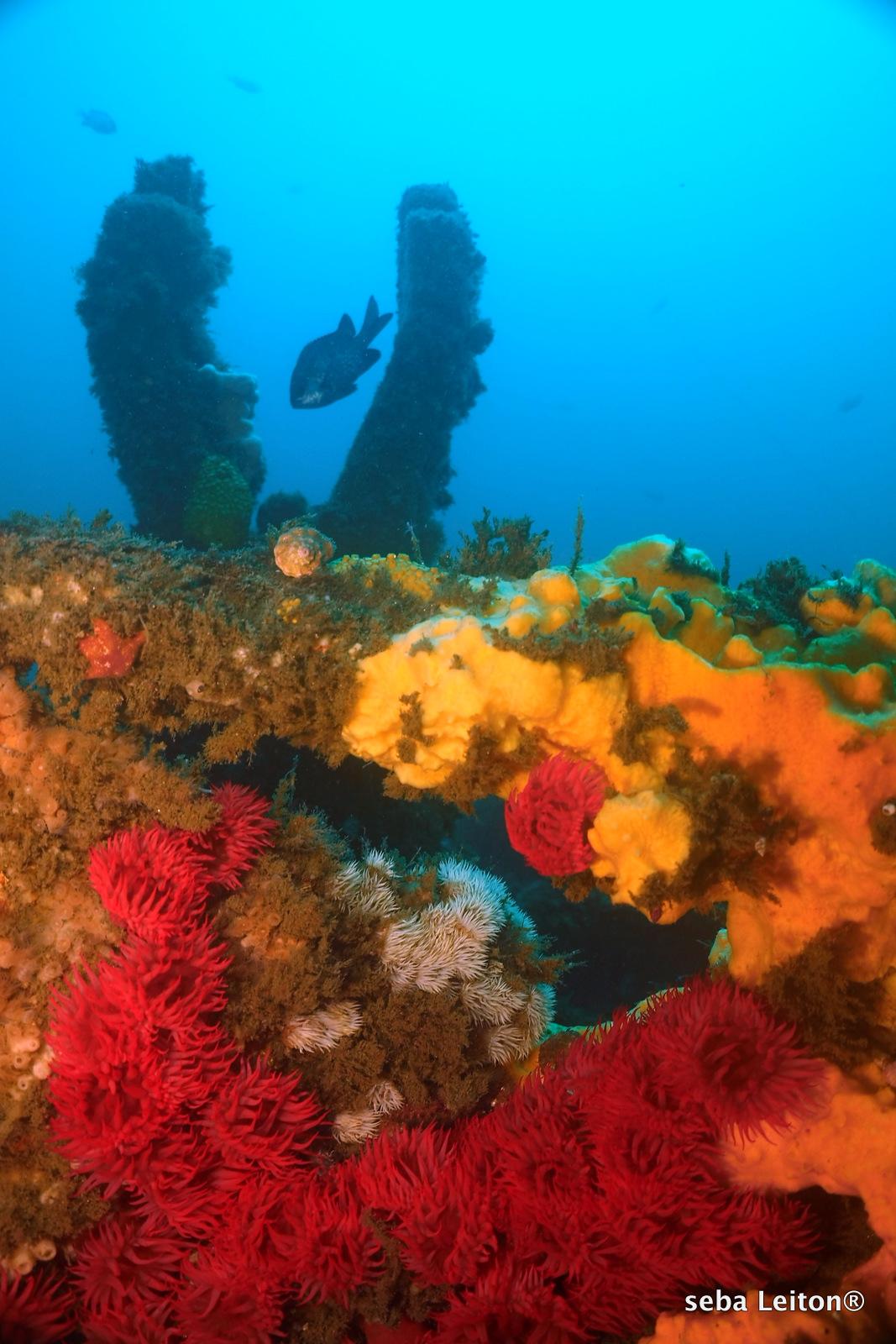 Colores en naufrágio, Chile