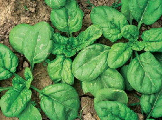 viroflay Spinach.PNG