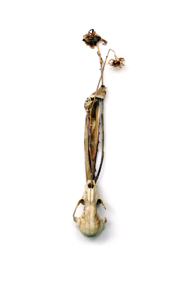 Still death, with flowers