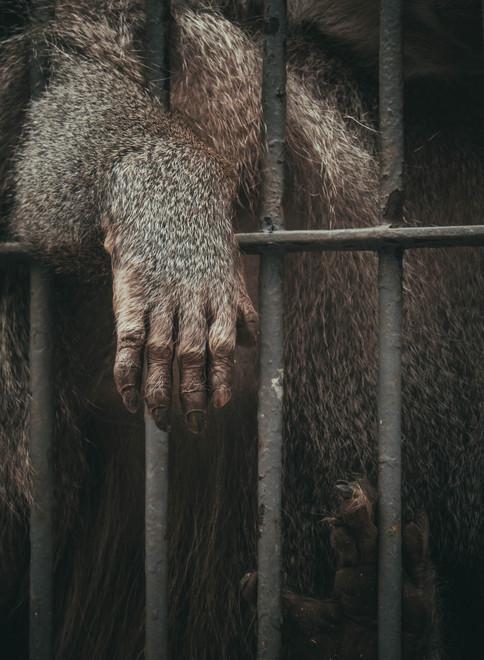 Thou shall not arm animals