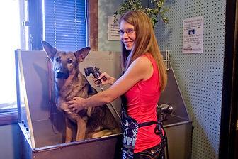 dog wash bath grooming groomer