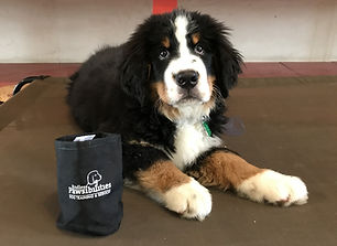 puppy dog training obedience