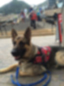 service dog assistance ptsd emotional support