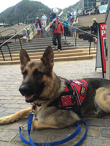 service dog assistance ptsd emotional support