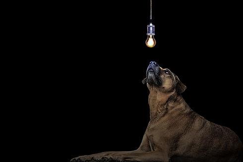dog-3435827_1920.jpg
