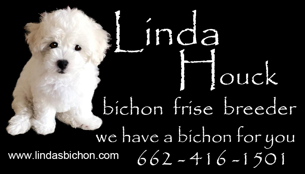 Bichon Frise Puppies | Linda's Bichons | United States