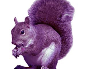 The Epicor ERP Purple Squirrel – 3 Tips for Hiring Success!