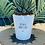 Thumbnail: 'Please don't die' Plant Pot