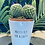 Thumbnail: 'Pretty fly for a cacti' Plant Pot